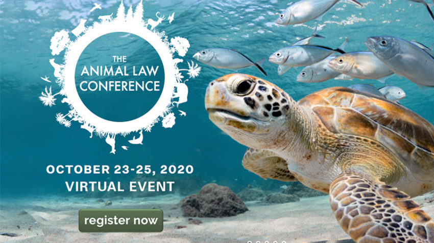 Animal law conference poster in which a turtle swims among fish.