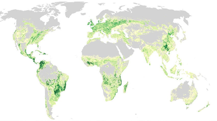 Map representing distribution of carbon in potential vegetation in areas of present-day animal feed croplands and pastures