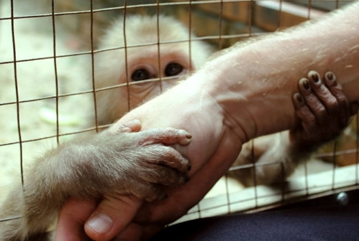 Monkey in a cage hugs a person's hand outside the cage. A man's hand